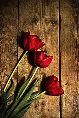 Photograph - Red Tulips by Ethiriel  Photography