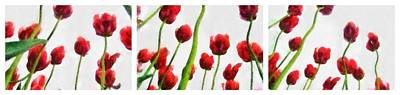 Still Life Royalty-Free and Rights-Managed Images - Red Tulips from the Bottom Up Triptych by Michelle Calkins