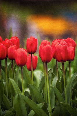 Landscape Netherlands Photograph - Red Tulips In Foreground With Lake by Sheila Haddad