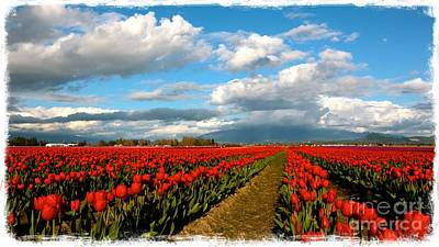 Photograph - Red Tulips Of Skagit Valley by Carol Groenen