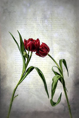 Vernal Photograph - Red Tulips On A Letter by Joana Kruse