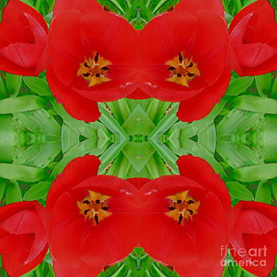 Photograph - Red Tulips Square Abstract 1 by Barbara Moignard