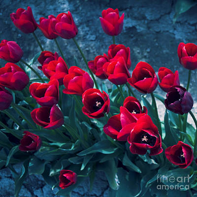 Photograph - Red Tulips by Yulia Kazansky