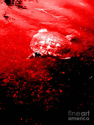 Digital Art - Turtle. Red And Black Art by Oksana Semenchenko