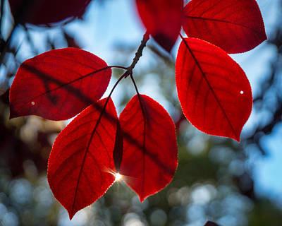 Photograph - Red Velvet by Bill Pevlor