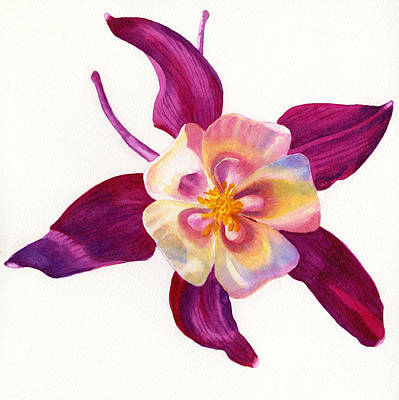 Red Violet Columbine Square Design Original by Sharon Freeman