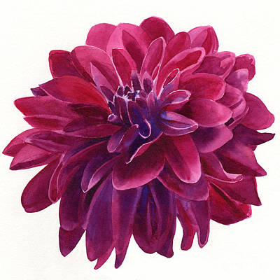 Red Violet Dahlia Square Design Art Print by Sharon Freeman