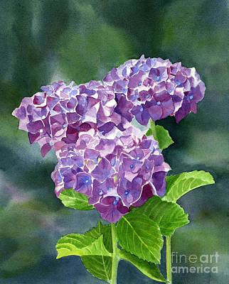 Hydrangea Watercolor Painting - Red Violet Hydrangea With Blackground by Sharon Freeman