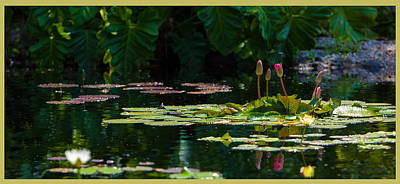 Red Water Lily In A Tropical Pond Art Print by Julio Solar