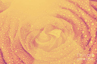 Red Wet Rose Flower Close-up In Vintage Style Art Print