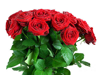 Red Wet Roses Flowers Bouquet Isolated On White Background Art Print