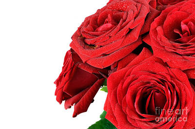 Engagement Photograph - Red Wet Roses Flowers Isolated On White by Michal Bednarek