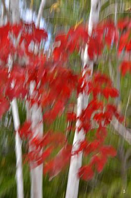Photograph - Red White by Minartesia