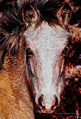 Photograph - Red Willow Pony II by Charles Muhle