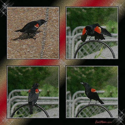 Manipulation Photograph - Red Wing Blackbird by EricaMaxine  Price