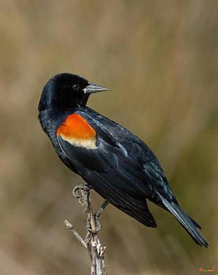 Photograph - Red-winged Blackbird Dsb009 by Gerry Gantt