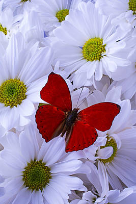 Red Wings On White Daises Art Print by Garry Gay