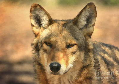 Photograph - Red Wolf by Kathy Baccari