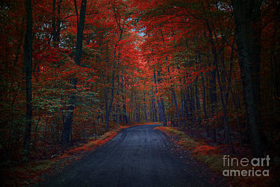 Nada Mas Llc Photograph - Red Woods by Marco Crupi