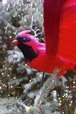 Photograph - Red Xmass Bird by Joan Reese