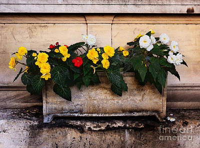 Stone Planter Photograph - Red Yellow And White Begonias by Louise Heusinkveld