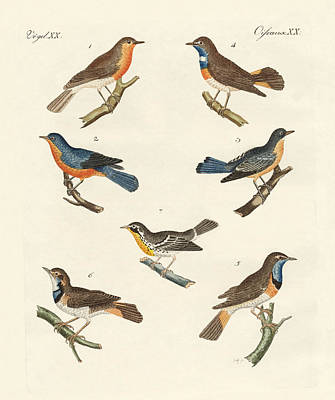 Bluebird Drawing - Redbreasts Bluethroats And Yellowthroats by Splendid Art Prints