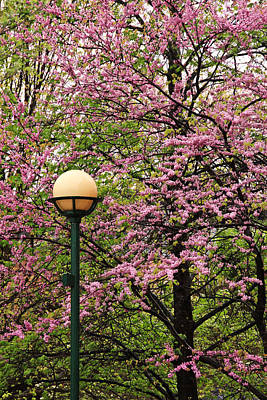 Photograph - Redbud And Lamp by Tom and Pat Cory