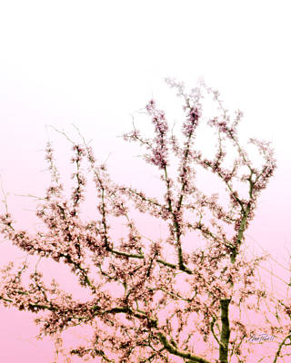Photograph - Redbud Blooms Pink On Pink by Ann Powell