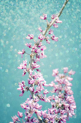 Photograph - Redbud Glitter Aqua by Jim And Emily Bush