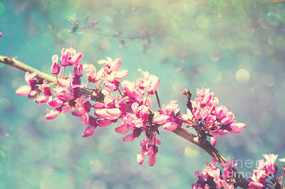 Photograph - Redbud Sparkle by Jim And Emily Bush