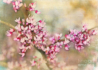 Photograph - Welcome Spring by Judi Bagwell