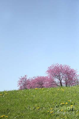 Photograph - Redbuds On Hill by Martha Burton