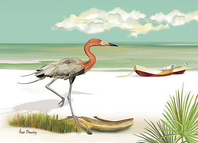 Reddish Egret Art Print