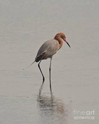 Photograph - Reddish Egret by Carol  Bradley