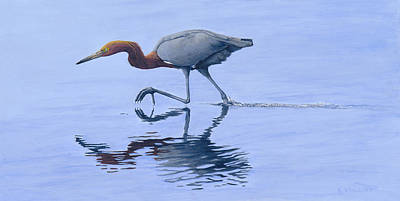 Painting - Reddish Egret by Kirsten Wahlquist