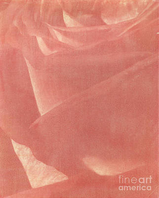 Photograph - Reddish Rose by Casper Cammeraat