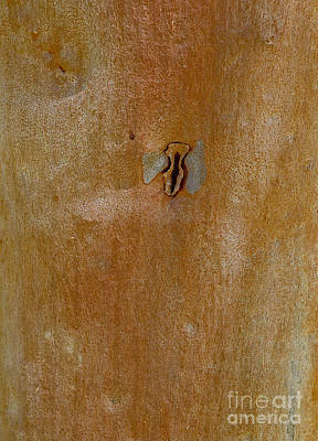 Photograph - Redgum Tree by Steven Ralser