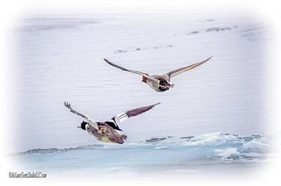 Drake Photograph - Redhead And  Merganser Ducks by LeeAnn McLaneGoetz McLaneGoetzStudioLLCcom