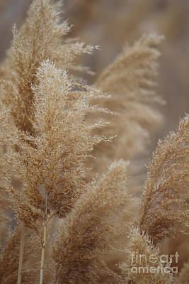 Photograph - Redish Brown Feathery River Plants by Jackie Farnsworth