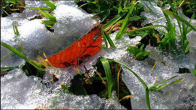 Photograph - Redleafgrasscomp 2009 by Glenn Bautista