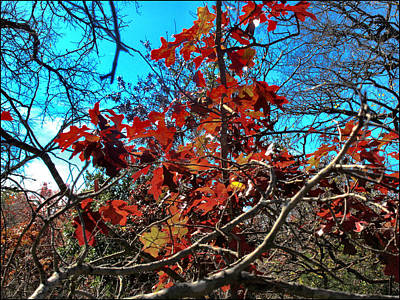 Photograph - Redplantcomp 2009 by Glenn Bautista