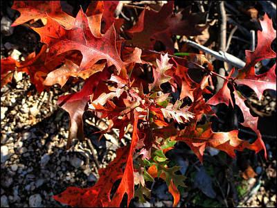 Photograph - Redplantcomp2 2009 by Glenn  Bautista