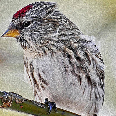 Digital Art - Redpoll Branch by Jim Pavelle