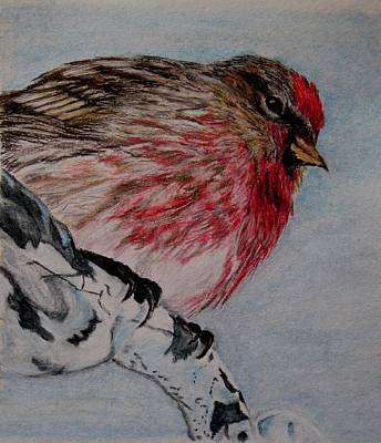 Painting - Redpoll by Joan Pye
