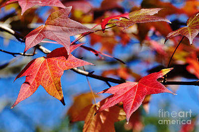 Reds Of Autumn Art Print by Kaye Menner