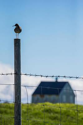 Redshank Tringa Totanus, Flatey Island Art Print by Panoramic Images