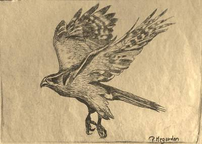 Redtail Hawk Original by Priscilla Pekas