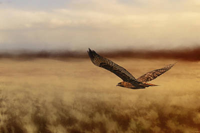 Red Tail Hawk Photograph - Redtail In The Field by Jai Johnson