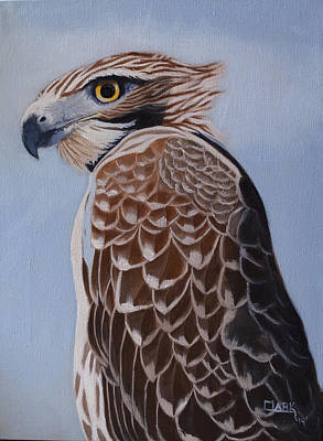 Painting - Redtail Portrait by Wade Clark