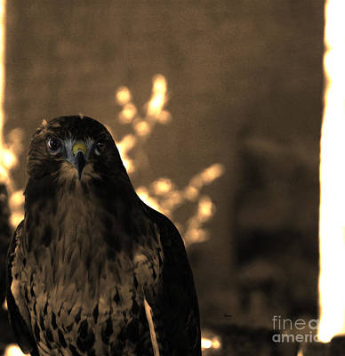 Hawk Birds Digital Art - Redtail by Steven  Digman